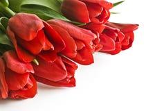 Blumenstrauß von roten Tulpen Lizenzfreies Stockbild
