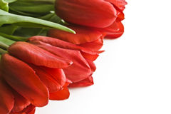 Blumenstrauß von roten Tulpen Lizenzfreies Stockfoto