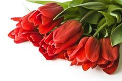 Blumenstrauß von roten Tulpen Lizenzfreie Stockbilder