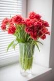 Blumenstrauß von roten Tulpen in einem Glasvase auf dem Fenster Stockfotografie