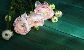 Blumenstrauß von schönem empfindlichem erblassen - rosa Blumen von Ranunculus auf einem grünen hölzernen Hintergrund Stockfotografie