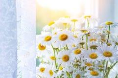 Blumenstrauß von schönen Gänseblümchen Stockfotografie