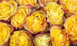 Blumenstrauß von schönen gelben und rosa modernen Rosen stockfotografie