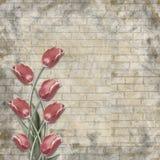 Blumenstrauß von schönen roten Tulpen auf dem Hintergrund der gemalten Backsteinmauer für Glückwunsch Stockfotografie