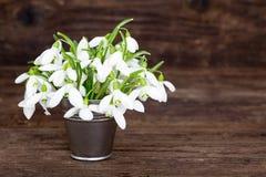 Blumenstrauß von Schneeglöckchen Lizenzfreie Stockbilder