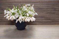 Blumenstrauß von Schneeglöckchen Stockfoto