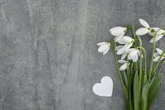 Blumenstrauß von Schneeglöckchen auf grauem Steinhintergrund mit Kopienraum f Stockbild