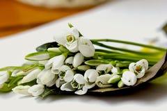 Blumenstrauß von Schneeglöckchen auf Papier Stockfotos