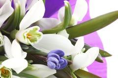Blumenstrauß von snowdrops Lizenzfreies Stockbild