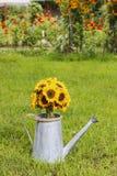 Blumenstrauß von Sonnenblumen in der silbernen Gießkanne, die auf dem gra steht Stockbild