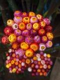 Blumenstrauß von Straw Flower Lizenzfreies Stockfoto