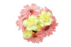 Blumenstrauß von Transvaal-Gänseblümchen und -gartennelke in einem weißen Hintergrund lizenzfreies stockbild