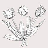 Blumenstrauß von Tulip.Sketch Schwarzweiss. Lizenzfreies Stockfoto