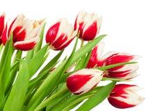 Blumenstrauß von Tulpen Lizenzfreie Stockfotos