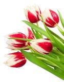 Blumenstrauß von Tulpen Stockbild