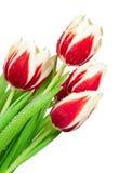 Blumenstrauß von Tulpen Lizenzfreies Stockfoto