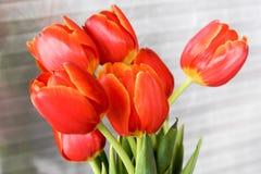 Blumenstrauß von Tulpen Stockbilder