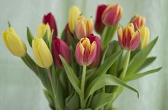Blumenstrauß von Tulpen auf einem hellen Hintergrund stockfotos