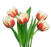 Blumenstrauß von Tulpen auf weißem Hintergrund Stockfotografie