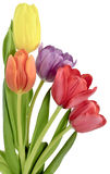 Blumenstrauß von Tulpen in fünf verschiedenen Farben Lizenzfreie Stockfotos