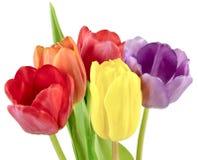 Blumenstrauß von Tulpen in fünf verschiedenen Farben Stockbild