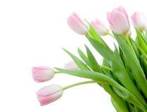 Blumenstrauß von tuplips Lizenzfreie Stockfotografie