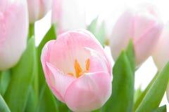 Blumenstrauß von tuplips Lizenzfreie Stockfotos