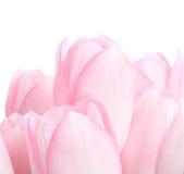 Blumenstrauß von tuplips Lizenzfreies Stockfoto