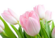 Blumenstrauß von tuplips Stockbilder