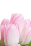 Blumenstrauß von tuplips Lizenzfreies Stockbild
