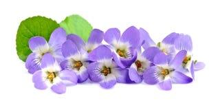Blumenstrauß von Veilchenblumen stockfoto