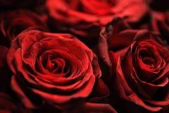 Blumenstrauß von verblaßten Rosen Stockfotos