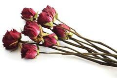 Blumenstrauß von verwelkten Rosen gegen einen weißen Hintergrund Stockbilder
