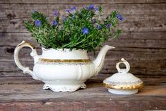 Blumenstrauß von Violet Flowers im weißen Tee-Topf Lizenzfreie Stockbilder