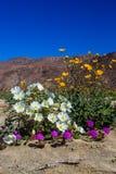 Blumenstrauß von Wüsten-Blumen Stockfotos