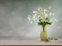 Blumenstrauß von weißem Adonis in einem Glasvase Stockfotografie