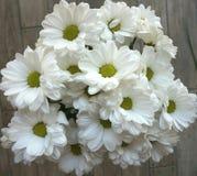 Blumenstrauß von weißen Blumen des Sommers auf dem Boden stockbild