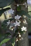 Blumenstrauß von weißen Blumen zur Sonne am Abend Stockbild