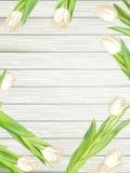 Blumenstrauß von weißen Tulpen ENV 10 Lizenzfreies Stockbild