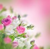 Blumenstrauß von weißen und rosa Rosen lizenzfreie stockbilder