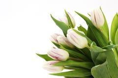 Blumenstrauß von weißen und violetten Tulpen Lizenzfreie Stockfotografie