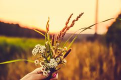 Blumenstrauß von Wildflowers bei Sonnenuntergang auf dem Gebiet Stockbilder