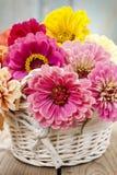 Blumenstrauß von Zinniablumen im Weidenkorb Stockbilder