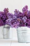 Blumenstrauß zwei von lila Blumen Lizenzfreies Stockbild