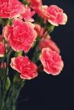 Blumenstraußgartennelke Lizenzfreies Stockbild