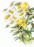 Blumenstraußkamille Wildfloweraquarell Lizenzfreie Stockfotos