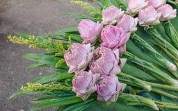 Blumenstraußlotos Stockfoto