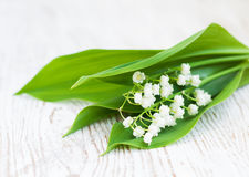 Blumenstraußmaiglöckchen Stockfotografie