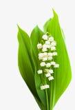 Blumenstraußmaiglöckchen Lizenzfreies Stockbild