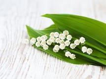 Blumenstraußmaiglöckchen Stockfotos
